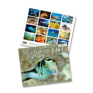 Marine Life of Hawai'i 2021 Trade Calendar