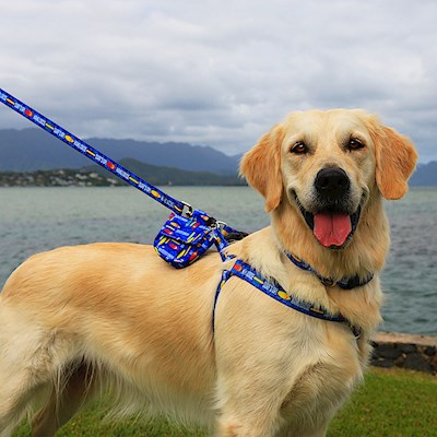Pet Harness, Surf's Up - S